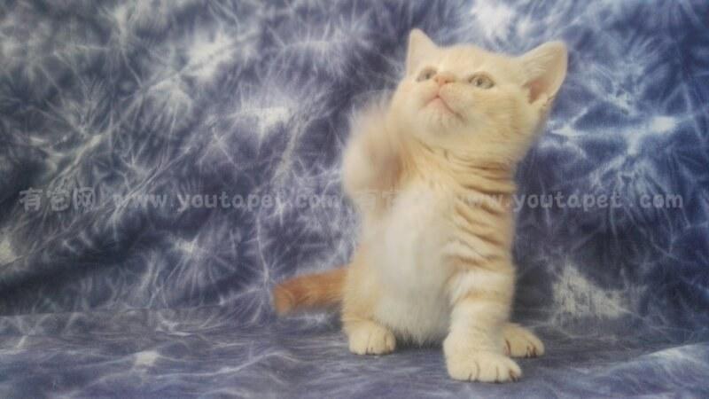 壁纸 动物 狗 狗狗 猫 猫咪 小猫 桌面 800_450